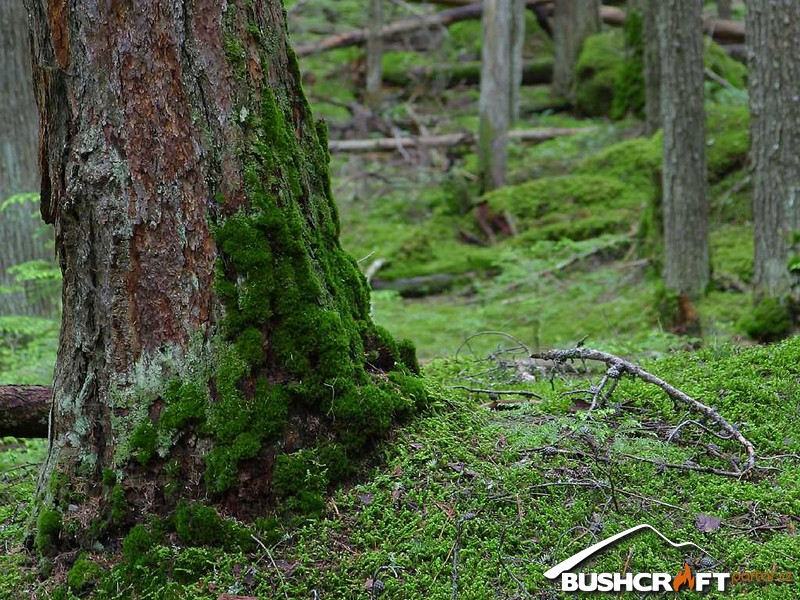climbing-moss
