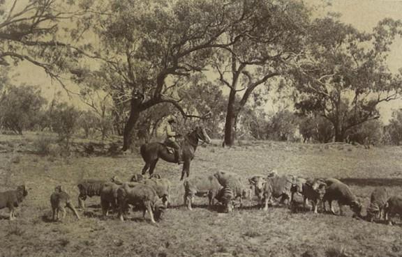 aboriginal_stockman_1910